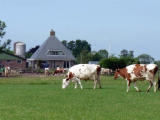 Rauwmelkse kaas, direct van onze koeien